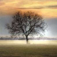 Misty Silhouette Fine-Art Print