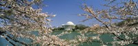 Cherry blossom with memorial in the background, Jefferson Memorial, Tidal Basin, Washington DC, USA Fine-Art Print