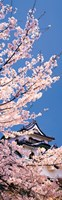 Hikone Castle w\cherry blossoms Shiga Japan Fine-Art Print