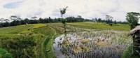 Farmers working in a rice field, Bali, Indonesia Fine-Art Print