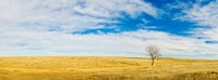 Lone Hackberry tree in autumn plains, South Dakota Fine-Art Print