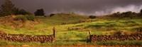 Stone wall in a field, Kula, Maui, Hawaii, USA Fine-Art Print