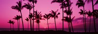 Silhouette of palm trees at dusk, Hawaii, USA Fine-Art Print