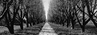 Trees along a walkway in black and white, Niagara Falls, Ontario, Canada Fine-Art Print