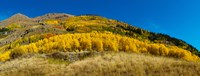 Aspen trees on mountain, Alpine Loop Scenic Backway, San Juan National Forest, Colorado, USA Fine-Art Print