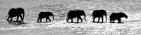 Herd of African Elephants Crossing the Uaso Nyiro River, Kenya (black & white) Fine-Art Print