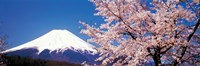 Mt Fuji Cherry Blossoms Yamanashi Japan Fine-Art Print