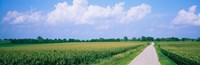 Road along corn fields, Jo Daviess County, Illinois, USA Fine-Art Print