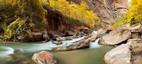 Cottonwood trees and rocks along Virgin River, Zion National Park, Springdale, Utah, USA Fine-Art Print