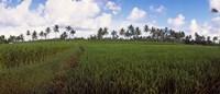 Rice field, Bali, Indonesia Fine-Art Print
