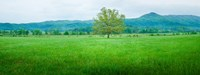 Agricultural field with mountains in the background, Cades Cove, Great Smoky Mountains National Park, Tennessee, USA Fine-Art Print