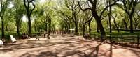 Central Park, New York City, New York State Fine-Art Print