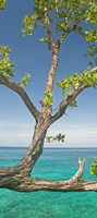 Tree overhanging sea at Xtabi Hotel, Negril, Westmoreland, Jamaica Fine-Art Print