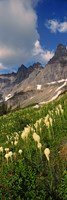 Beargrass with Mountains, Glacier National Park, Montana Fine-Art Print