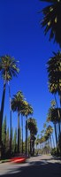 Palm trees along a road, Beverly Hills, Los Angeles County, California, USA Fine-Art Print