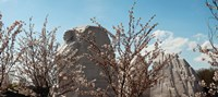 Cherry trees in front of a memorial, Martin Luther King Jr. National Memorial, Washington DC, USA Fine-Art Print