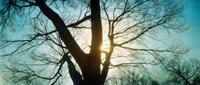 Sunlight shining through a bare tree, Prospect Park, Brooklyn, Manhattan, New York City, New York State, USA Fine-Art Print