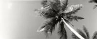 Low angle view of palm trees, Morro De Sao Paulo, Tinhare, Cairu, Bahia, Brazil Fine-Art Print