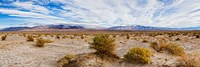 Bushes in a desert, Death Valley, Death Valley National Park, California, USA Fine-Art Print