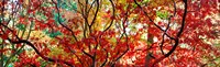 Sunlight Through Autumn leaves, Gloucestershire, England Fine-Art Print