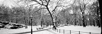 Central Park in Snow Fine-Art Print
