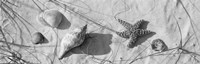 Close-up of a starfish and seashells on the beach, Dauphin Island, Alabama, USA Fine-Art Print