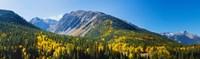 Aspen trees on mountain, Little Giant Peak, King Solomon Mountain, San Juan National Forest, Colorado, USA Fine-Art Print