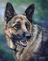 German Shepard Fine-Art Print