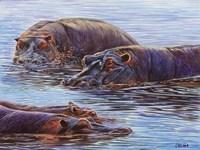 Hippo Pond Fine-Art Print