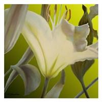 Lily Green Fine-Art Print