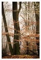 Bronze Tree Fine-Art Print