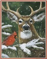 Deer With Cardinal Fine-Art Print