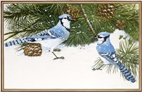Bluejays Fine-Art Print