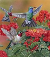 Hummingbirds & Flowers Fine-Art Print