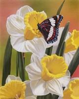 Daffodils & Butterfly Fine-Art Print