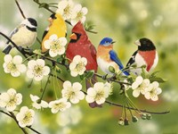 Songbirds On a Flowering Branch Fine-Art Print