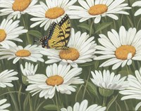 Daisies And Butterfly Fine-Art Print