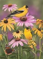 Golden Finches Fine-Art Print