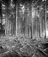 Forest Fine-Art Print