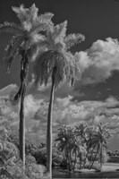 Eleven Palms Fine-Art Print