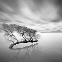 Water Tree VII Fine-Art Print