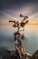Water Tree III Fine-Art Print