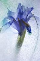 Flowers on Ice-6 Fine-Art Print