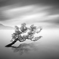 Water Tree VI Fine-Art Print