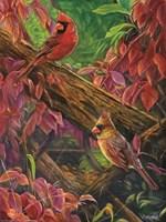 Red Rhapsody Fine-Art Print