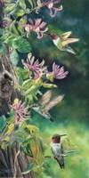 Flower Quest Fine-Art Print