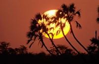 Sunrise behind silhouetted trees, Kenya, Africa Fine-Art Print