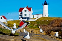 Seagulls at Nubble Lighthouse, Cape Neddick, York, Maine, USA Fine-Art Print