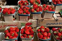 Strawberries for sale at weekly market, Arles, Bouches-Du-Rhone, Provence-Alpes-Cote d'Azur, France Fine-Art Print