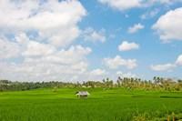 Rice field, Rejasa, Penebel, Bali, Indonesia Fine-Art Print